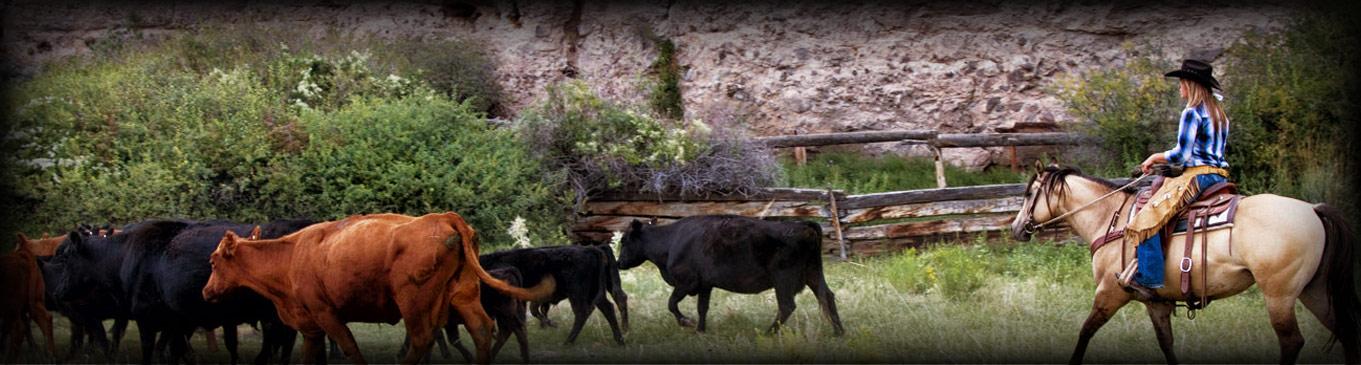 Rockin' R Ranch - Employment Inquiry