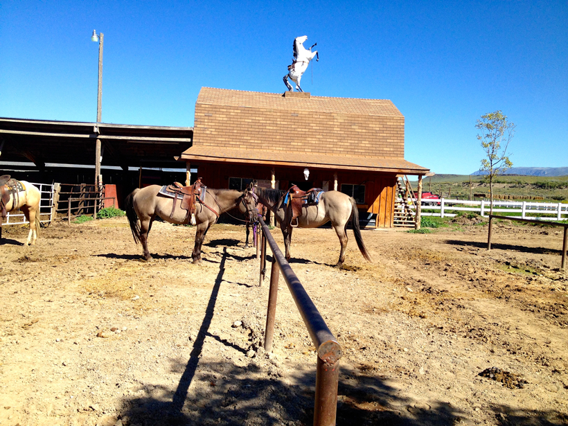 Horses Waiting To Be Ridden Rockin 39 R Ranch