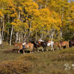 Cowboy pulling horses behind him