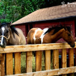 Horses at the Rockin R